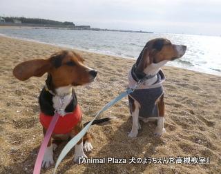 犬のようちえん高槻教室20130105 (2)