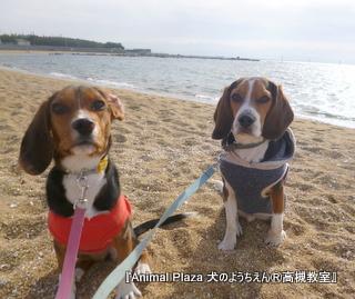 犬のようちえん高槻教室20130105 (3)