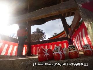犬のようちえん高槻教室20130113 (4)