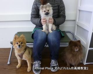犬のようちえん高槻教室20130121 (3)