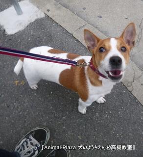 犬のようちえん高槻教室20130202 (2)