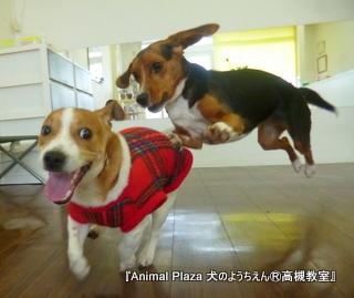 犬のようちえん高槻教室130224 (5)