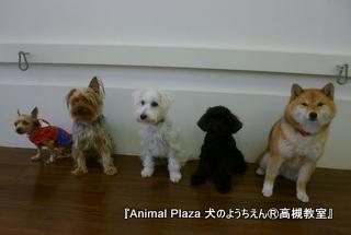 犬のようちえん高槻教室20130210 (2)
