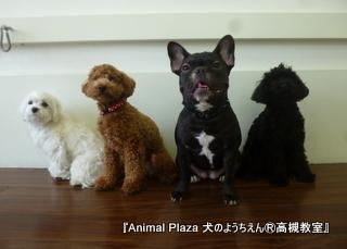 犬のようちえん高槻教室20130210