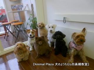 犬のようちえん高槻教室 20120210