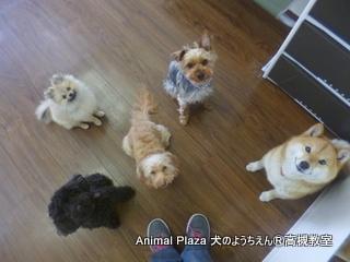 犬のようちえん高槻教室20130305 (4)