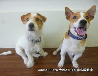 犬のようちえん高槻教室20130305 (9)