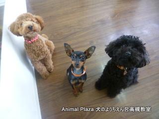 犬のようちえん高槻教室20130310 (4)