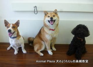 犬のようちえん高槻教室20130310 (6)