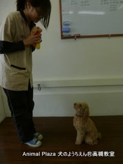 犬のようちえん高槻教室20130310 (8)