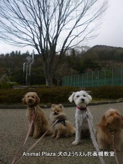 犬のようちえん高槻教室130415 (2)