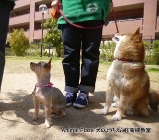 犬のようちえん高槻教室130415 (3)