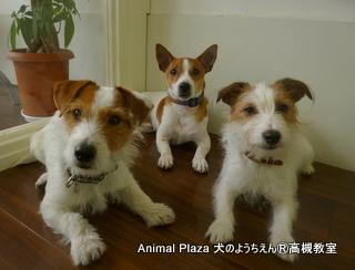 犬のようちえん高槻教室130415 (4)