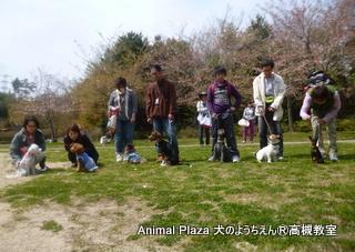 犬のようちえん高槻教室130415 (5)