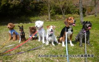 犬のようちえん高槻教室130415 (6)