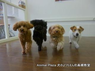 犬のようちえん高槻教室130429 (5)