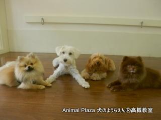 犬のようちえん高槻教室130429 (6)