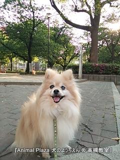 犬のようちえん高槻教室130503 (4)