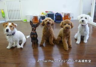 犬のようちえん高槻教室130519 (2)