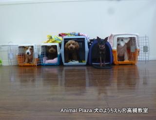 犬のようちえん高槻教室130519 (3)