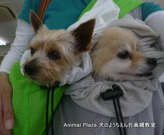 犬のようちえん高槻教室130519 (4)