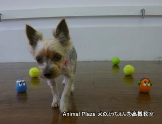 犬のようちえん高槻教室-130630 (2)