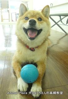 犬のようちえん高槻教室-130630 (6)