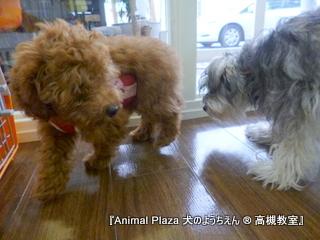 犬のようちえん高槻教室130611 (3)