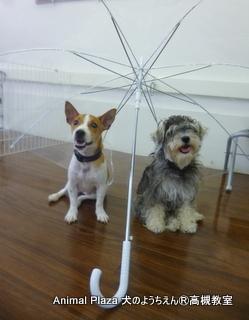 雨でお散歩に 行けない日もあるけど