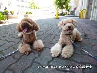 犬のようちえん高槻教室130630 (8)