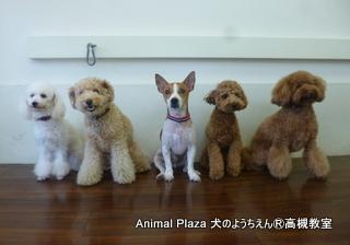 犬のようちえん高槻教室130721 (4)