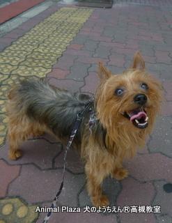 犬のようちえん高槻教室20130715 (4)