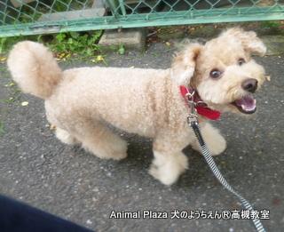 犬のようちえん高槻教室130811 (11)