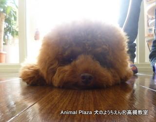 犬のようちえん高槻教室130811 (5)