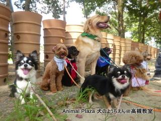 犬のようちえん高槻教室130811 (9)