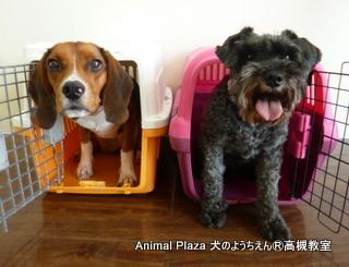 犬のようちえん高槻教室20130831 (11)