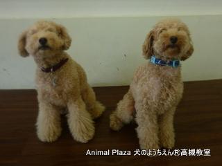 犬のようちえん高槻教室20130831