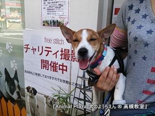 犬のようちえん高槻教室131013 (2)