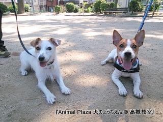 犬のようちえん高槻教室131013 (4)