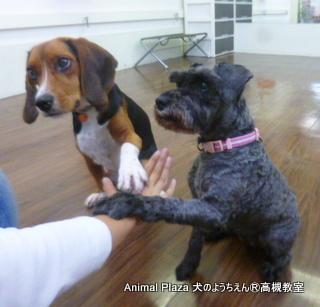 犬のようちえん高槻教室131020- (2)