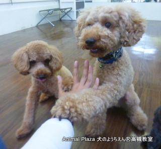 犬のようちえん高槻教室131020-