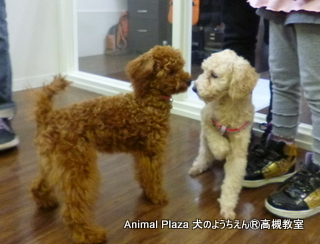 犬のようちえん高槻教室131110 (10)