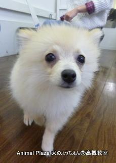 犬のようちえん高槻教室131110 (8)