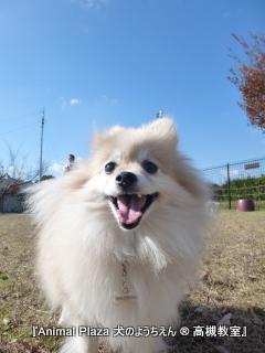犬のようちえん高槻教室131125 (3)