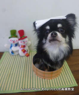 犬のようちえん高槻教室131205 (7)