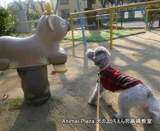 犬のようちえん高槻教室131208 (3)