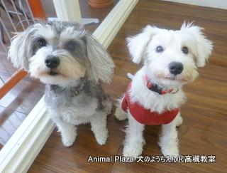 犬のようちえん高槻教室131208 (7)