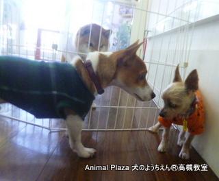 犬のようちえん高槻教室131208 (8)
