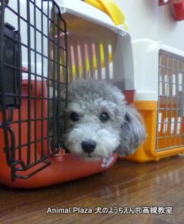犬のようちえん高槻教室131217 (2)