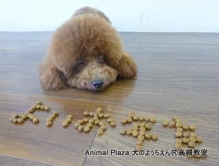 犬のようちえん高槻教室20131229